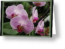 Striped Orchids With Border Greeting Card
