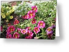 Striped Petunias Greeting Card