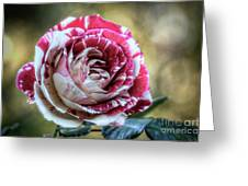 Striped Rose  Greeting Card