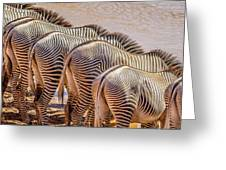 Stripes  7578 Greeting Card