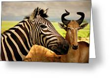 Stripes And Horns 2 Greeting Card
