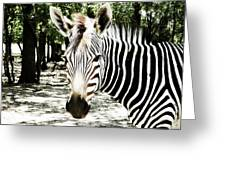 Stripes And Symmetry  Greeting Card