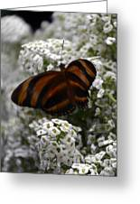 Stripes On Petals Greeting Card