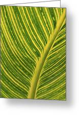 Stripey Leaf Greeting Card