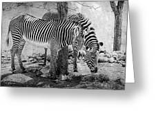Stripped Pair Greeting Card by Jeff Swanson
