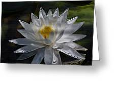 Stripped Waterlily Greeting Card