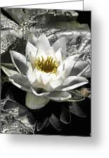 Strokes Of The Lily Greeting Card