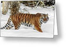 Stroll In The Snow Greeting Card