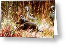 Stroll Of The Turkey Greeting Card