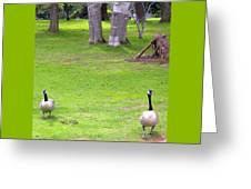Strolling Canadian Geese Greeting Card