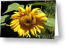 Strolling Through The Sunflowers Greeting Card