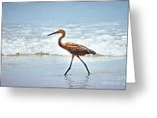Strolling Greeting Card by Todd Blanchard
