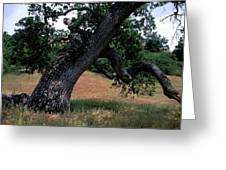 Strong Old Oak Greeting Card