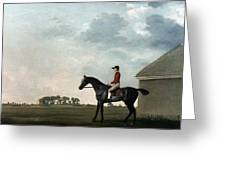 Stubbs: Gimcrack, 1765 Greeting Card