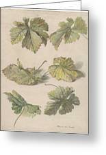 Studies Of Vine Leaves, Willem Van Leen, 1796 Greeting Card