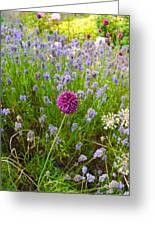 Study In Purple Greeting Card