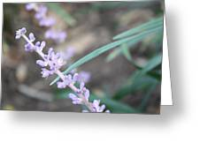 Study In Purple Monkey Grass Bloom Greeting Card
