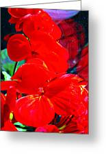 Study In Red Greeting Card