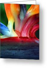 Study Of A Bird Of Paradise 3 Greeting Card