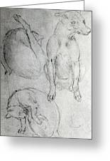 Study Of A Dog And A Cat Greeting Card