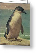 Study Of A Penguin Greeting Card by Henry Stacey Marks