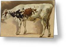 Study Of A Young Bull Greeting Card