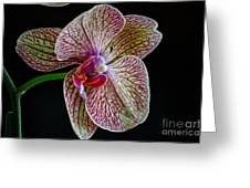 Study Of An Orchid 2 Greeting Card