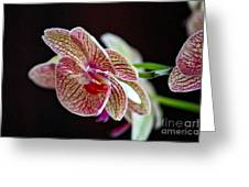 Study Of An Orchid 3 Greeting Card
