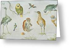 Study Of Birds And Monkeys Greeting Card