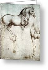 Study Of Horses 1490 Greeting Card