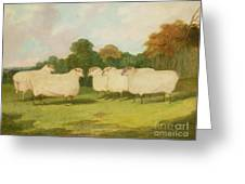 Study Of Sheep In A Landscape   Greeting Card by Richard Whitford
