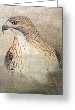 Study Of The Red-tail Hawk Greeting Card by Leslie M Browning