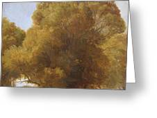 Study Of Trees 1849 Greeting Card