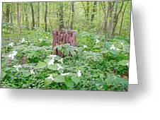 Stump By The Trilliums Greeting Card