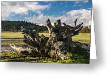 Stump In Field  Greeting Card