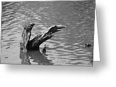 Stump In Lake Greeting Card