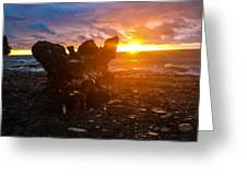 Stump On Lake Erie Greeting Card