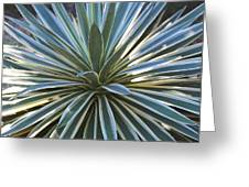 Stunning Agave Plant Greeting Card