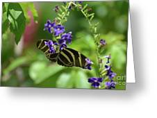 Stunning Black And White Zebra Butterfly In The Spring Greeting Card