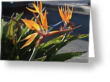Stunning Bunch Of Flowers With Bright Orange Petals  Greeting Card