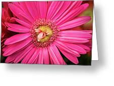 Stunning Gerbera Greeting Card