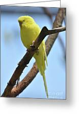 Stunning Little Yellow Budgie Parakeet In Nature Greeting Card