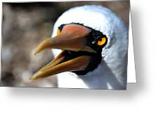 Stunning Nazca Booby Greeting Card