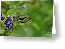 Stunning Shot Of A Zebra Butterfly On A Flower Greeting Card