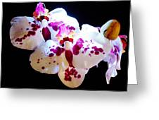 Stunning Twin Orchids Greeting Card
