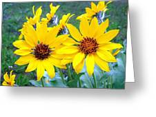 Stunning Wild Sunflowers Greeting Card