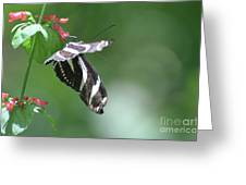Stunning Zebra Butterfly On A Pink Flower Greeting Card