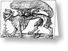 Su Monster (opossum), 1558 Greeting Card