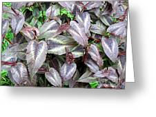 Subdued Leaves Greeting Card