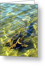 Submerged Tree Abstract Greeting Card